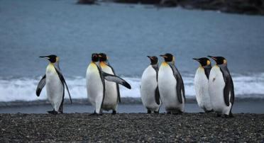 full-day-tierra-del-fuego-pinguino-rey-id246-1