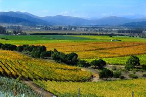 casablanca-valley-wine-tasting-including-4-vineyards-in-santiago-322784